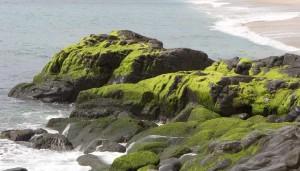Malibu-Shores